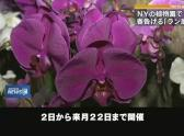 """Orchid exhibition"" of botanical garden telling spring"