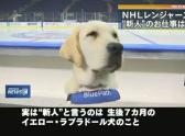 """""""New face"""" joins team of NHL"""